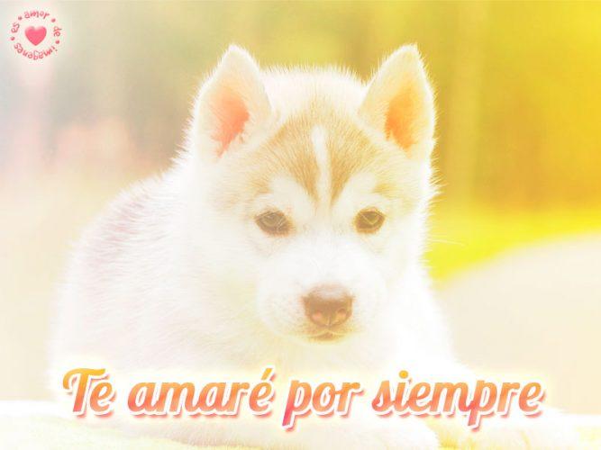 Precioso perrito con frase de amor por siempre