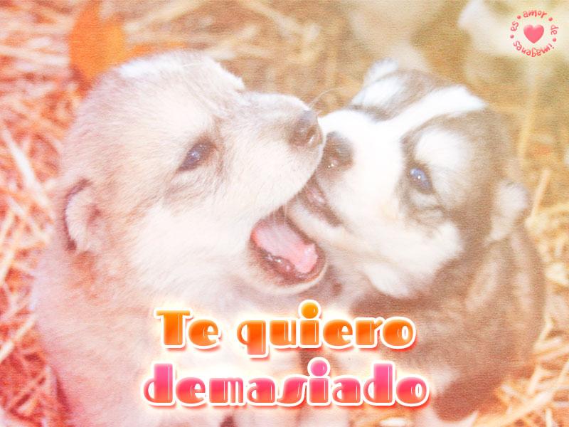 Preciosos perros con frase de amor
