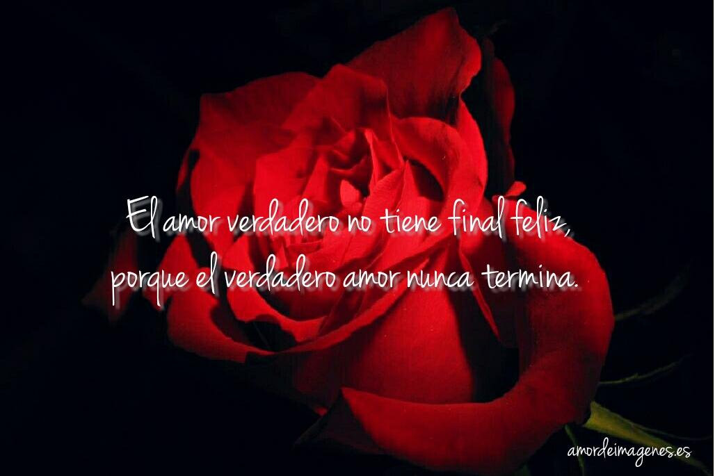 Rosas Bonitas De Amor Amor Verdadero