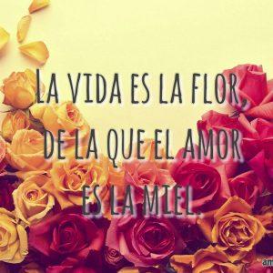 rosas-bonitas-de-amor-flor-de-la-vida