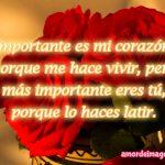 rosas-rojas-importancia