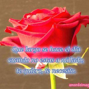 rosas-rojas-rosa-sola