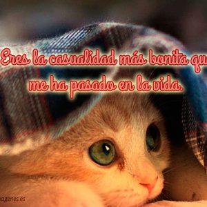 Tierno gato con frase de amor