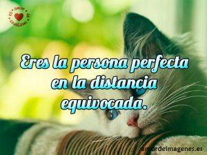 Eres la persona perfecta en la distancia equivocada.