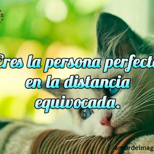 Imagen de Gato Pensativo Frases Tristes de Amor a Distancia