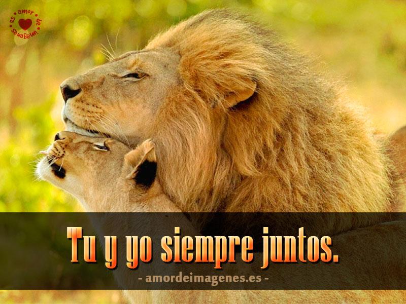 Tu y Yo Siempre Juntos