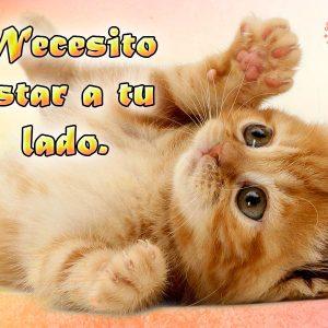 Imagen de Amor con Frase de Gato Frases de Amor para los Amantes de los Gatos