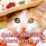 Imagen de Gato con Mensaje de Amor Frases de Amor para los Amantes de los Gatos