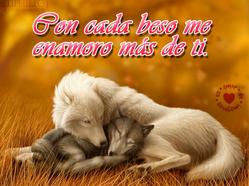 Hermosos Lobos Blancos Con Frases Romanticas