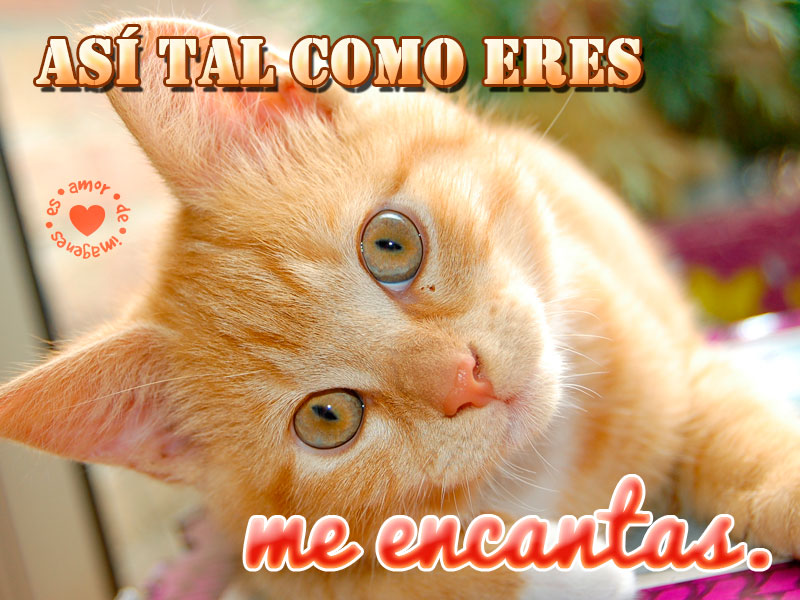 Frases De Amor Para Los Amantes De Los Gatos