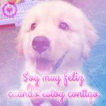 tierna foto de perrito con frase de amor