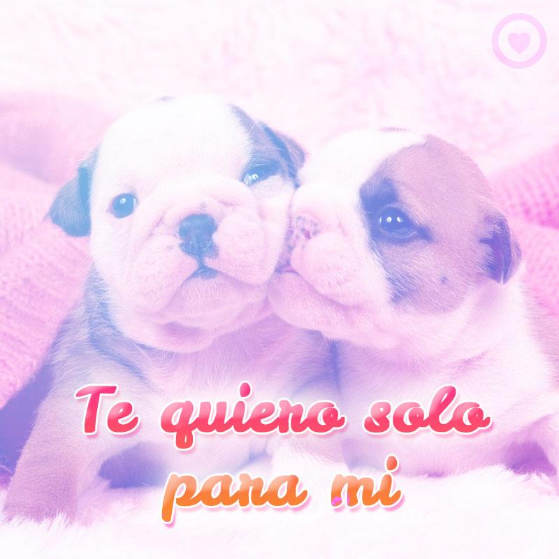 pareja de cachorros con frase te quiero