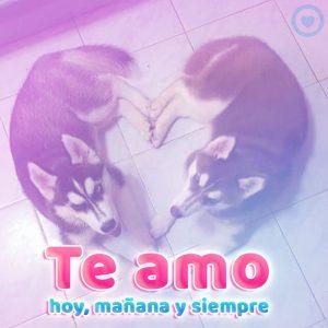 bonita pareja de perritos con frase te amo