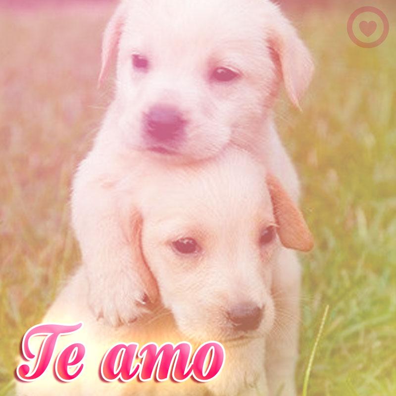 tiernos cachorros con frase te amo