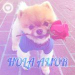 bonito perrito con rosa y frase hola amor
