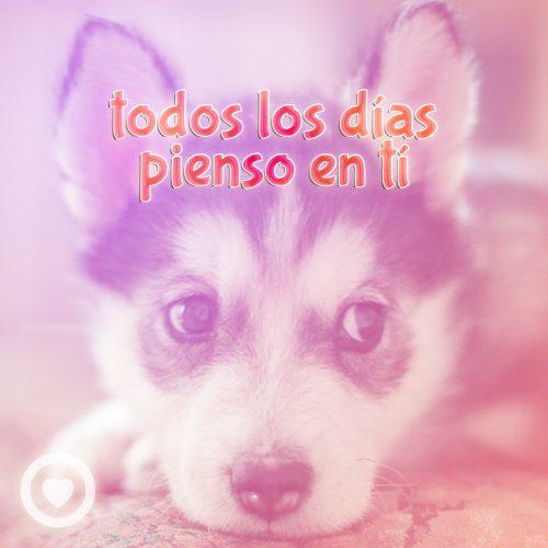 tierno perro con frase de amor