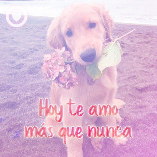 hermoso perro con frase de amor y rosa