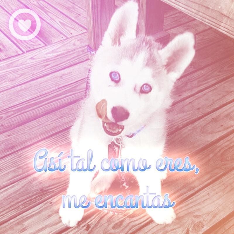 bonito perro con frase de amor