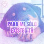 hermosa foto de perrito con frase de amor