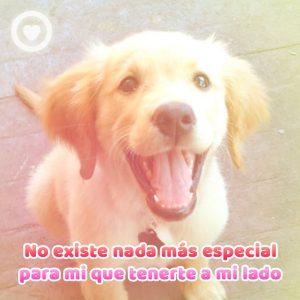 hermosa imagen de perrito sonriente con frase