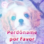 bonito perrito con frase de perdón