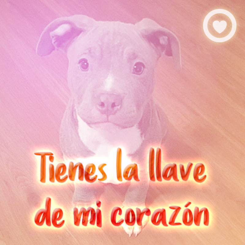 imagen de amor de perro