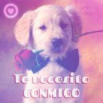 perrito con rosa y frase de amor