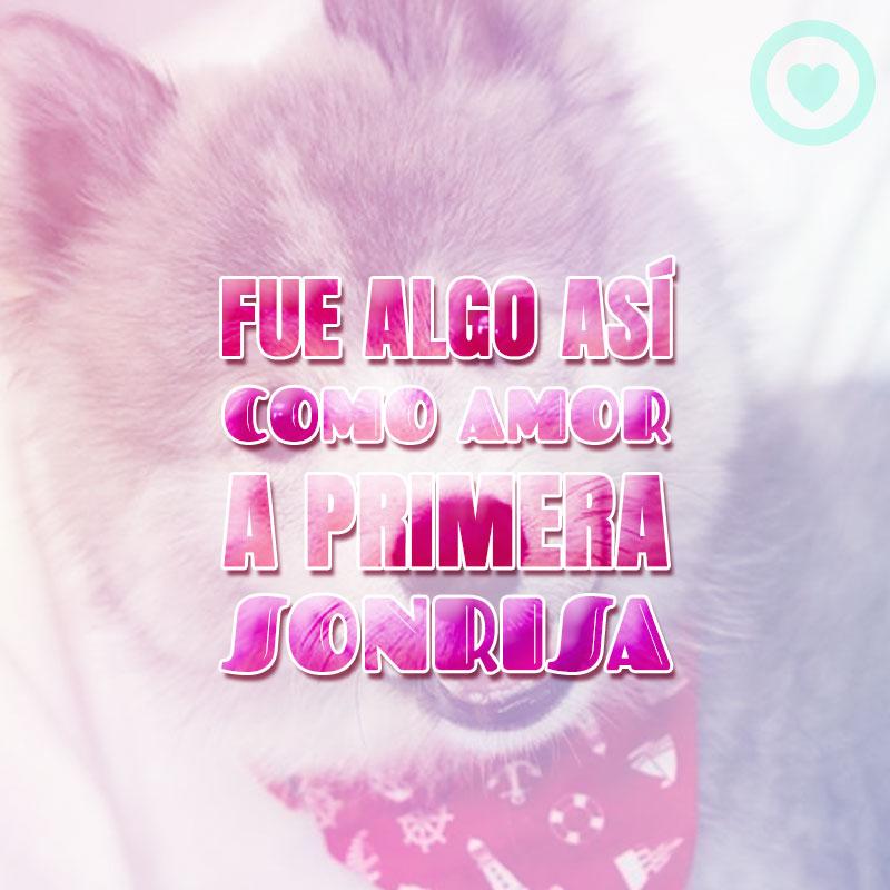 bonita imagen de perrito con frase de amor