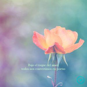 Flor con frase de amor