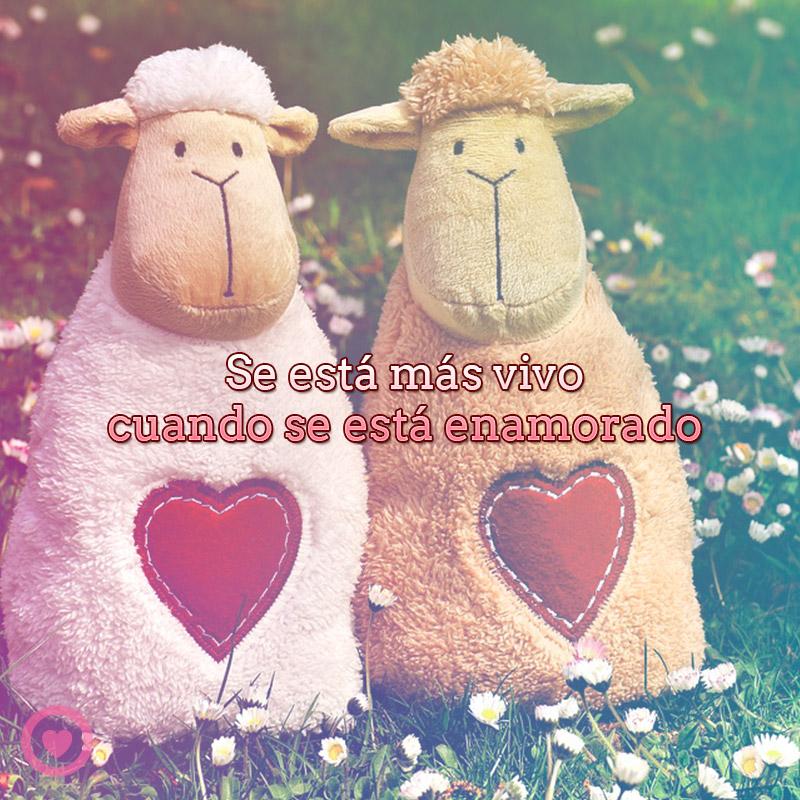 Pareja de ovejitas con frase de amor