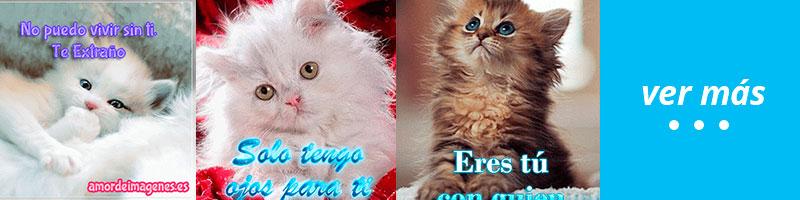 imagenes con movimiento de gatos