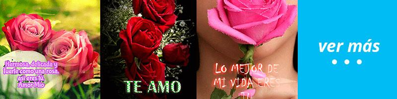 imagenes de rosas con movimiento y brillos
