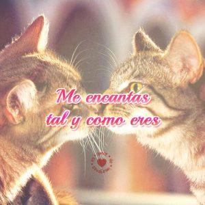 Gatitos besándose con bonito mensaje de amor.