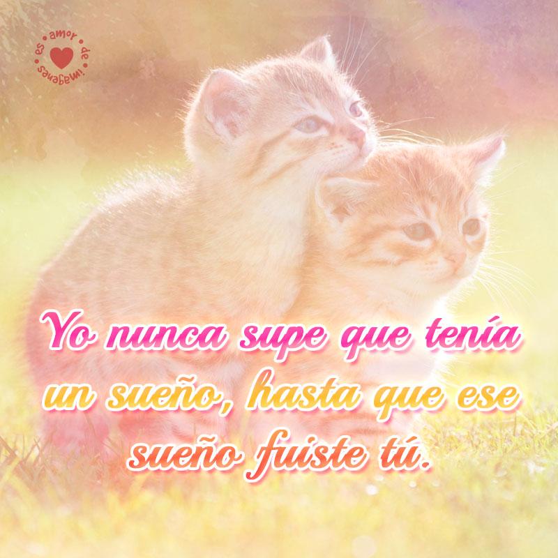 Graciosos felinos con mensaje de amor para compartir.