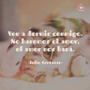 hermoso-gatito-con-bella-frase-romántica-de-Julio-Cortázar