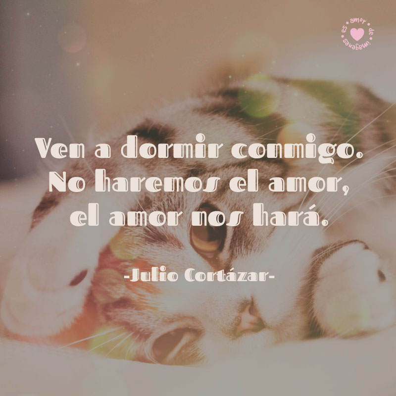 Hermoso Gatito Con Bella Frase Romantica De Julio Cortazar