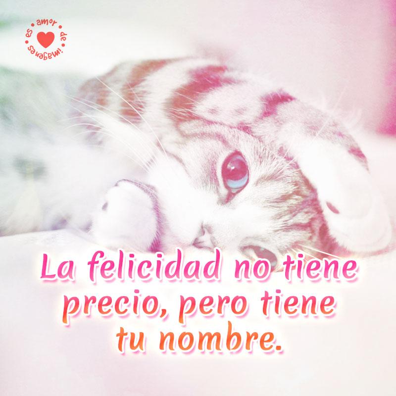 Hermoso gatito para enamorar a la persona que amas.