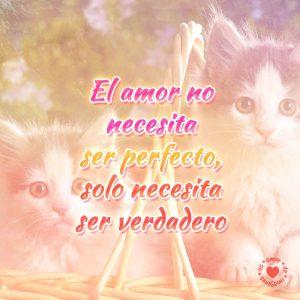 Hermosos gatitos con pensamiento de amor para dedicar.