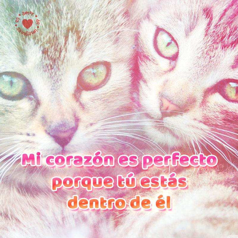 Lindos gatitos con hermoso mensaje para enamorar.