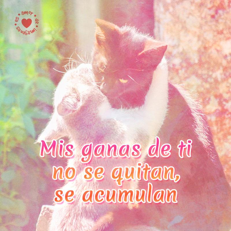 Románticos gatitos abrazados con frase de amor.