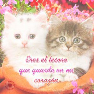 Tierna pareja de gatitos con linda frase para compartir.