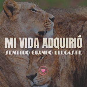 tiernos leones amorosos con frase de amor corta