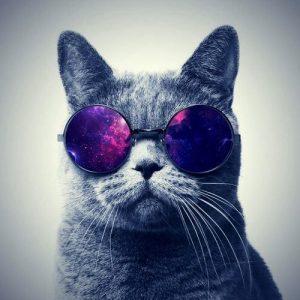 fondo de pantalla para celular chido de gato