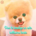 bonito perrito con mensaje de buenas tardes