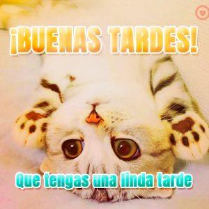 tarjeta de buenas tardes con gatito para dedicar